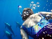Swim With the Dolphins in Hawaii